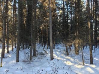 Indian Pipe Bog Murphy Road Sax-Zim Bog MN IMG_2341