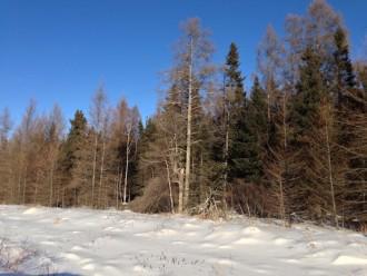 Indian Pipe Bog Murphy Road Sax-Zim Bog MN IMG_2346