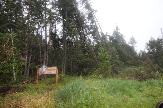 storm damage Warren Nelson Memorial Bog Sax-Zim BogIMG_4478
